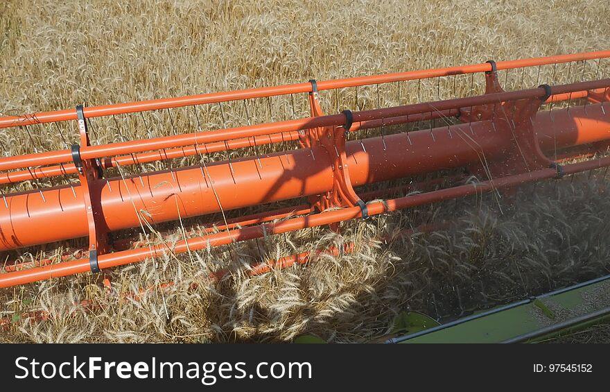 Harvesting grain. Harvester `claas lexion`