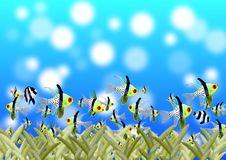 Free Blue, Sky, Ecosystem, Marine Biology Stock Photo - 97593370