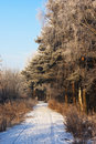 Free Winter View 3 Stock Image - 9767231