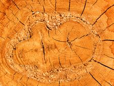 Free Cut Of A Tree An Oak Stock Photography - 9760012
