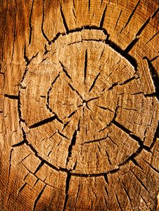Free Tree An Oak A Cut Royalty Free Stock Image - 9760206