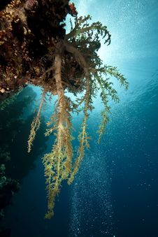 Free Ocean, Sun And Soft Coral Stock Images - 9760734