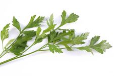 Free Green Parsley Royalty Free Stock Image - 9761736