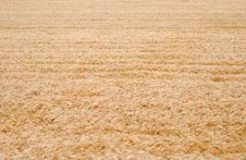 Free Field Of Wheat Stock Photography - 9762662