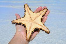 Free Hand Holding Starfish Royalty Free Stock Photo - 9763275