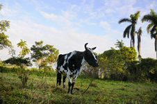 Free Cuban Countryside Stock Images - 9763344