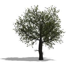 Free Oak Tree Stock Photography - 9763422
