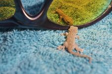 Curious Gecko Royalty Free Stock Photos