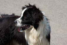 Free Dog Stock Image - 9764981