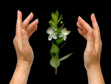 Free Hands And Flower Stock Photography - 9765082
