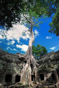 Ta Prohm Temple, Cambodia Series 02 Stock Photos