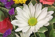 Free White Daisy Royalty Free Stock Photo - 9766985