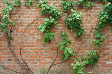 Free Old  Wall Royalty Free Stock Image - 9767426