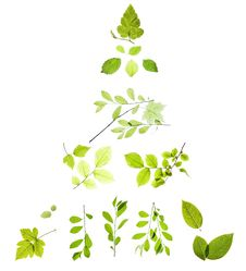 Free Leaves On White Royalty Free Stock Photos - 9767658