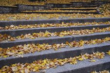 Free Outdoor Stairway With Yellow Fallen Leaves Royalty Free Stock Photos - 9768618