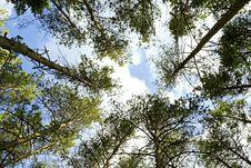 Free Trees Stock Photo - 9769040