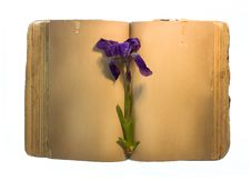 Free Old Book With Flower Royalty Free Stock Photos - 9769318