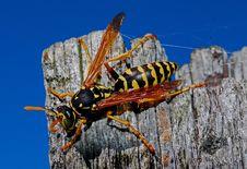 Free Insect, Invertebrate, Macro Photography, Arthropod Stock Image - 97601881