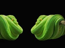 Free Green, Reptile, Scaled Reptile, Organism Stock Images - 97605034