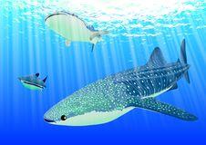 Free Blue, Water, Fish, Marine Biology Stock Images - 97605364