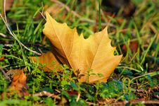Free Leaf, Autumn, Deciduous, Plant Royalty Free Stock Photos - 97662648