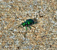 Free Insect, Invertebrate, Beetle, Arthropod Stock Photography - 97663212
