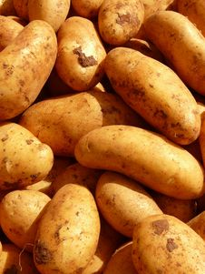 Free Root Vegetable, Potato, Yukon Gold Potato, Food Royalty Free Stock Image - 97672476