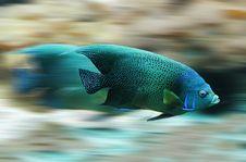 Free Blue, Marine Biology, Fauna, Underwater Stock Image - 97674061