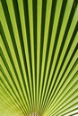 Free Palm Leaf Stock Photography - 9776782