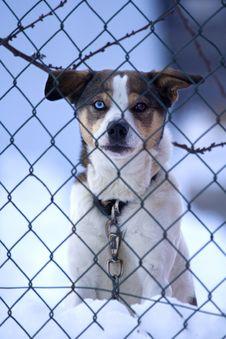 Free Brik, A Prisoner Watchdog Stock Photos - 9770503