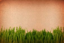 Free Green Grass Against A Grungy Toned Paper Backgroun Stock Photography - 9771072