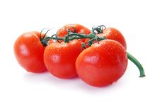 Red Tomatoes On A Branch With Water Drops Royalty Free Stock Photo