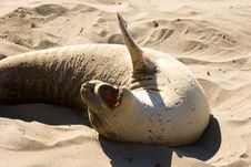 Free Sea Lion Stock Images - 9772274