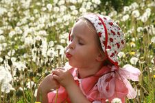 Dandelions Stock Photos