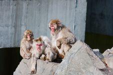 Free Monkey S At The Zoo Royalty Free Stock Photo - 9776985