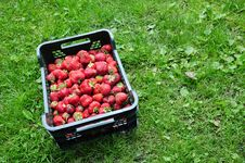 Free Strawberry In Plastic Box Stock Image - 9777171