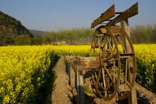 Free Water Wheel And Yellow Flowers Royalty Free Stock Photo - 9778755