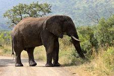 Free Elephant Royalty Free Stock Photos - 9779058