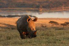 Free Baby White Rhino Stock Image - 9779331