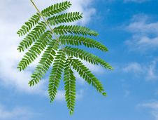 Free Twig On Sky Background Royalty Free Stock Image - 9779676