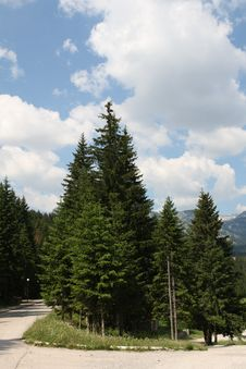 Free Fir Trees And Blue Sky Royalty Free Stock Images - 9779779