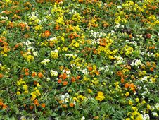 Free Flowers Field Stock Images - 97736034