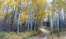 Free Autumn Calgary Alberta &x28;15&x29; Royalty Free Stock Image - 97787716