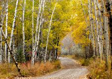 Free Autumn Calgary Alberta &x28;12&x29; Stock Photo - 97787810