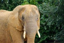 Free Elephant Stock Photos - 97787923