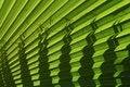 Free Palm Leaf Stock Image - 9782471