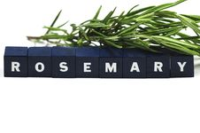 Free Rosemary Stock Image - 9780851