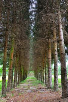 Free Forest Walking Path Stock Photography - 9780992