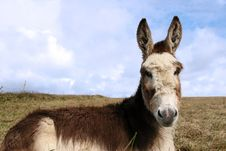 Free Little Donkey Stock Photos - 9781243