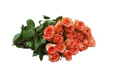 Roses Of Orange Colour Royalty Free Stock Image